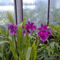 Vente d 39 orchid es botaniques et hybrides tillandsia for Entretien jardin yerres